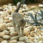 il_gatto-274-600-450-80
