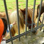 il_pony-276-600-450-80